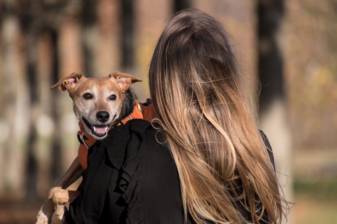 Photo of a long haired women carrying a smiling dog.